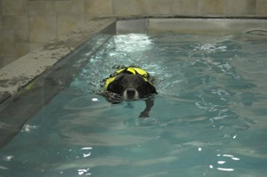kampanj simkörkort