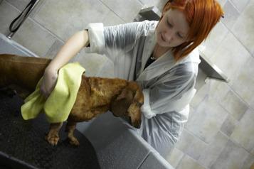 torkhandduk till hund