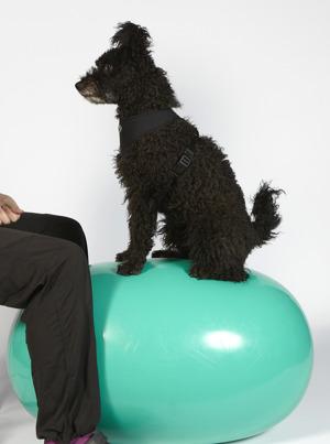 träning med balansboll för hund