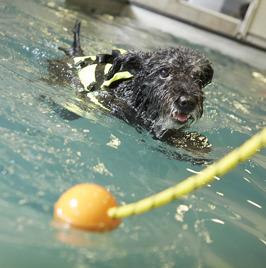 Vi erbjuder simträning i bassäng både i friskvårds- och rehabiliteringssyfte. På egen hand eller med instruktör.