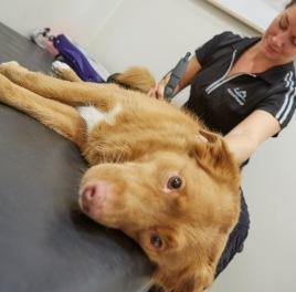Vi erbjuder rehabilitering och friskvård för alla hundar, med eller utan remiss från veterinär. Simträning i bassäng, laserbehandling, vibrationsbehandling, akupunktur, fyskoll och träningsupplägg. Vi håller även kurser och föreläsningar.