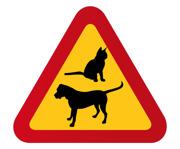 Hund & Katt