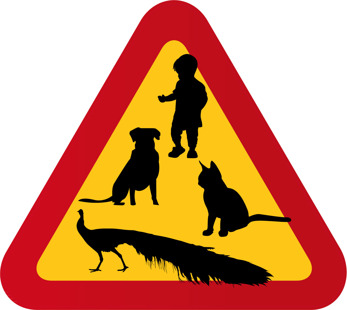Hund, barn, katt, påfågel