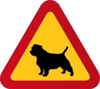 Hund Norfolk terrier