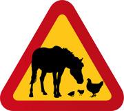 Häst & Höns