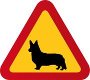 Hund Welsh Corgi