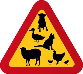Hund, katt, anka, får & höna