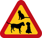 Barn, flicka, hund & katt