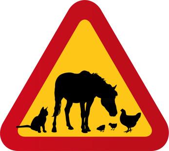 Häst, katt & höns