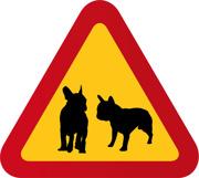 Hund Fransk Bulldog