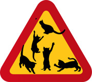 Fem busiga katter