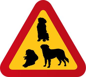 Hundar Berner Sennen