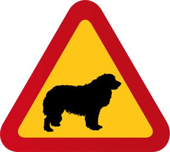 Hund Leonberger