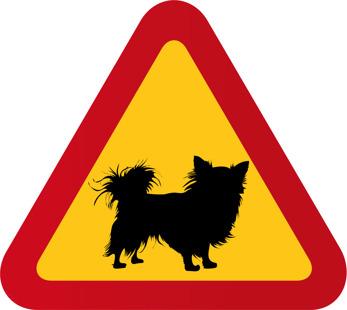 Hund Chihuahua - Varningstriangel