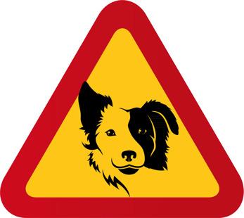 Hund Bordercollie ansikte