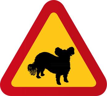 Hund Bolognese