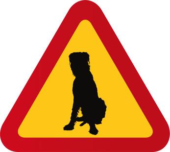 Hund Irländsk varghund