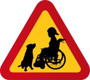 Pojke med rullstol och hund