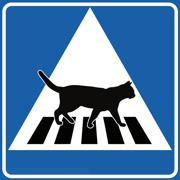 Övergångsställe Katt