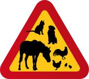 Hund, häst, höna, tupp, katt