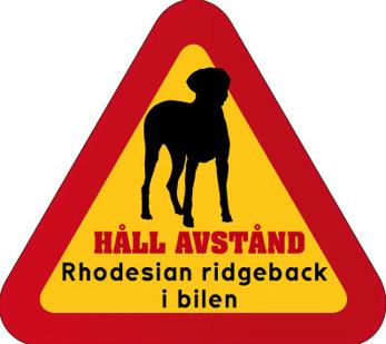 Dekal - Hund i bil Rhodesian ridgeback
