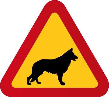 Hund Schäfer 3