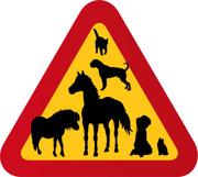 Hästar, katter, hund, boxer, flicka