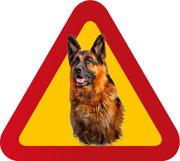 Hund Schäfer porträtt 1