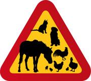Hund, häst, höna, tupp, katt, anka