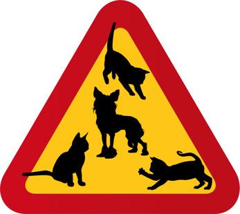 Hund Nakenhund Chinese Crest och tre katter