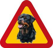 Hund Rottweiler porträtt