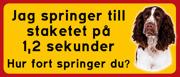 Skylt Springer Spaniel med text: Jag springer till  staketet på  1,2 sekunder. Hur fort springer du?