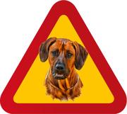 Varningsskylt Hund Rhodesian Ridgeback/porträtt