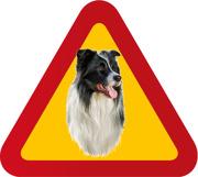 Hund Border collie porträtt
