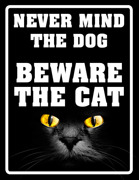NEVER  MIND THE DOG - BEWARE  THE CAT, ögon