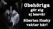 Obehöriga  gör sig  ej besvär. Siberian Husky  vaktar här!