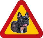 Hund Fransk Bulldog porträtt mörk
