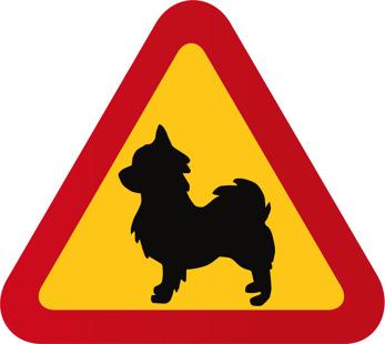 Hund Chihuahua långhårig
