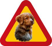 Varningsskylt Hund Tollare porträtt 1