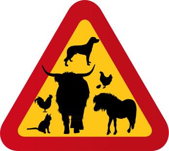 Highland cattle, ponny, hund, tupp, höna, katt