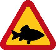 Fisk, karp