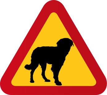 Hund Hovawart