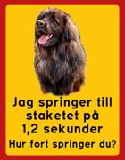 Skylt Leonberger: Jag springer till staketet på 1,2 sek, porträtt