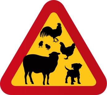 Får, liten hund & hönsfamilj