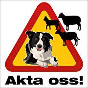Akta oss (får och vallhund)