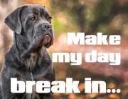 Make my day - break in (Cane Corso)