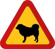 Hund Tibetansk mastiff
