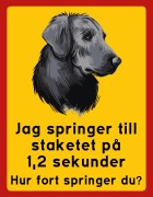 Jag springer till  staketet på  1,2 sekunder   Hur fort springer du? Flatcoated retriever
