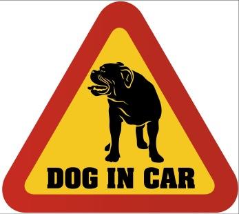 Dekal - Dog in car - Old english bulldog