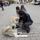 KAPPADOKIEN 2014 Anatolisk herdehund kopia 72 dpi